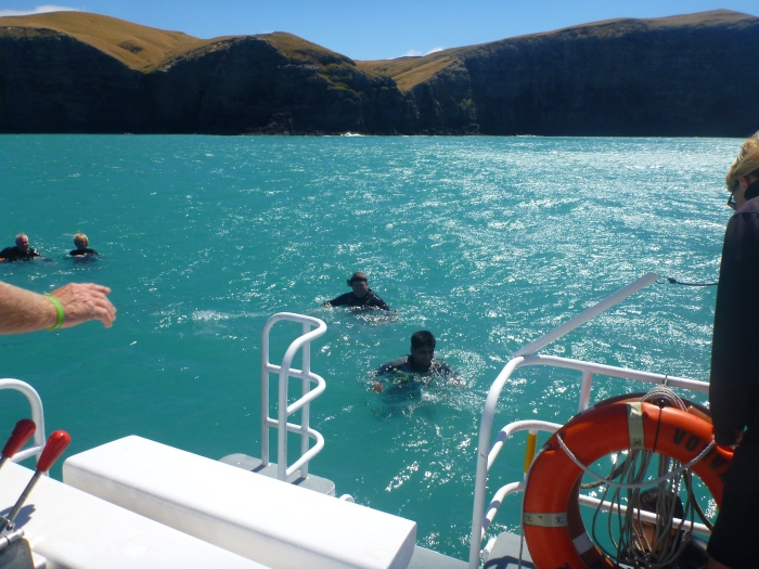 akaroa dolphins 2