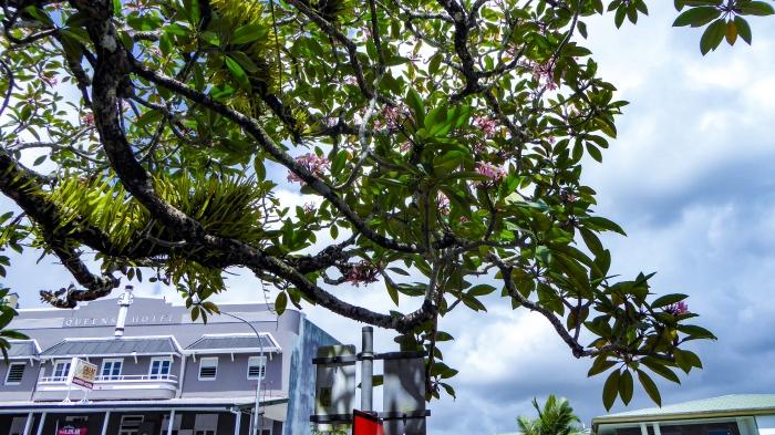 Innisfail tropical plants and art deco_