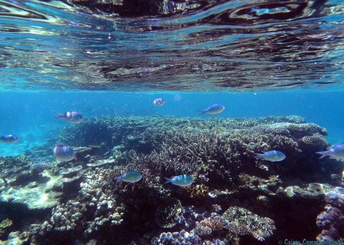 Lifou underwater