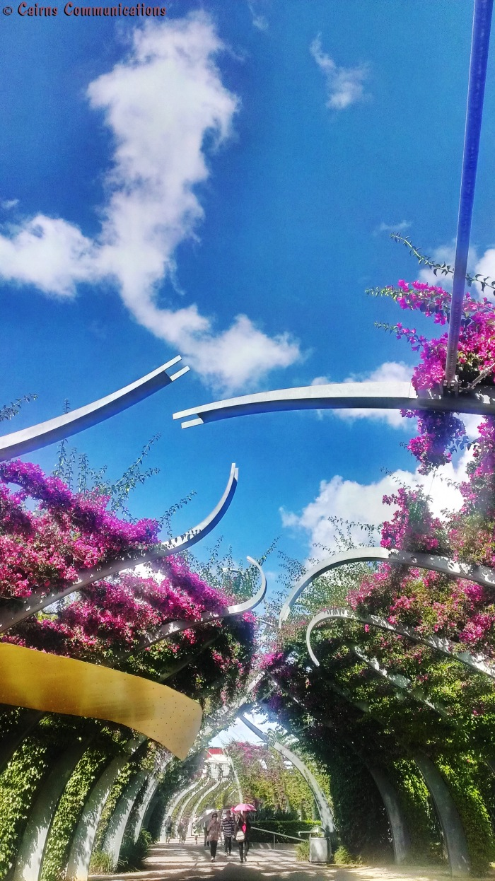 Southbank Bouganvillea In Bloom