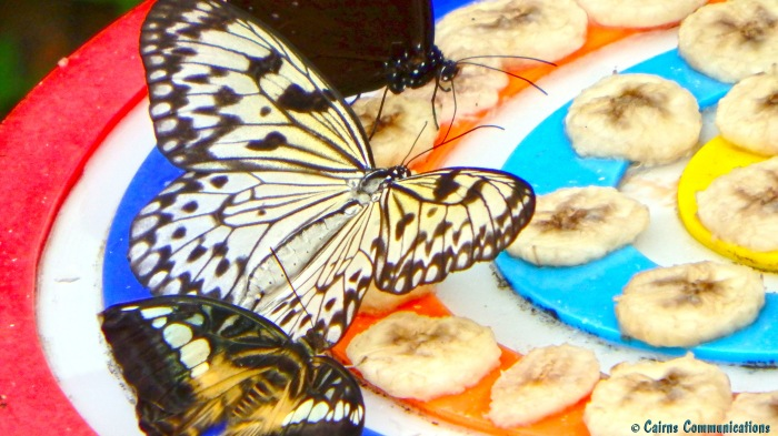 Butterflies on Bananas - Sentosa Island