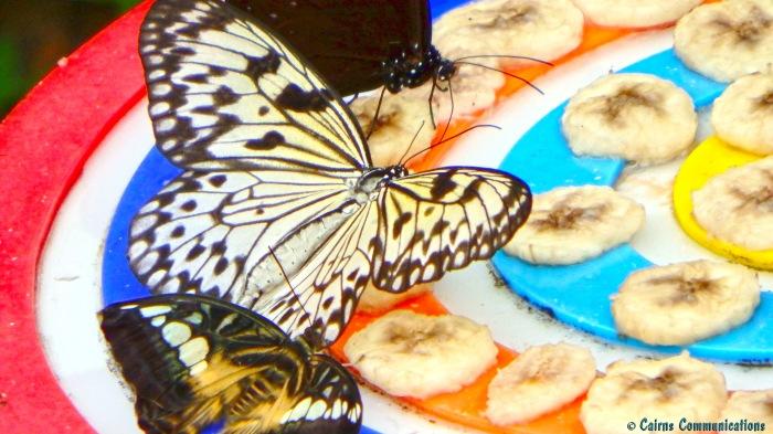 Butterflies on Bananas - Sentosa Island
