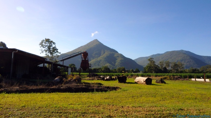 Walsh's Pyramid, Gordonvale