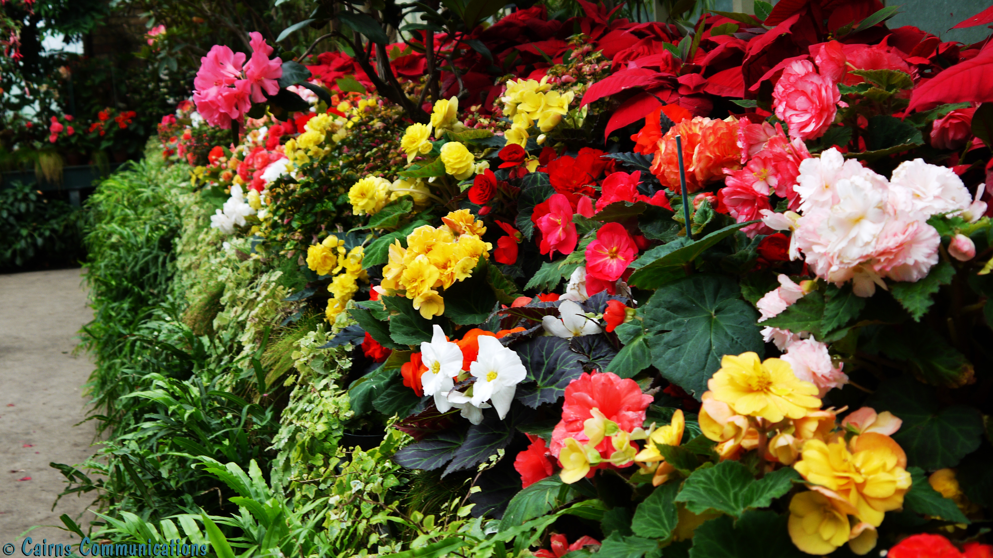 travel pics theme g for gardens auckland wintergardens cairns