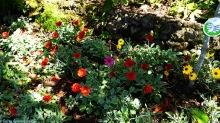 Funchal Flowers