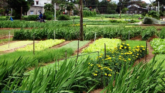 Hoi An Market Garden
