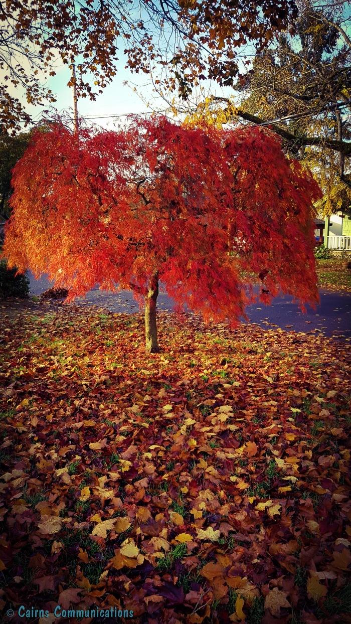 Portland Fall Colour